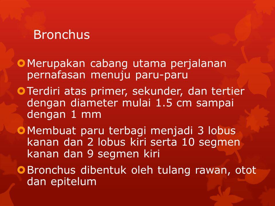 Bronchus  Merupakan cabang utama perjalanan pernafasan menuju paru-paru  Terdiri atas primer, sekunder, dan tertier dengan diameter mulai 1.5 cm sam