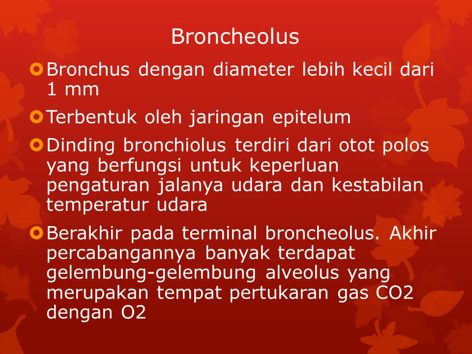 Broncheolus  Bronchus dengan diameter lebih kecil dari 1 mm  Terbentuk oleh jaringan epitelum  Dinding bronchiolus terdiri dari otot polos yang ber