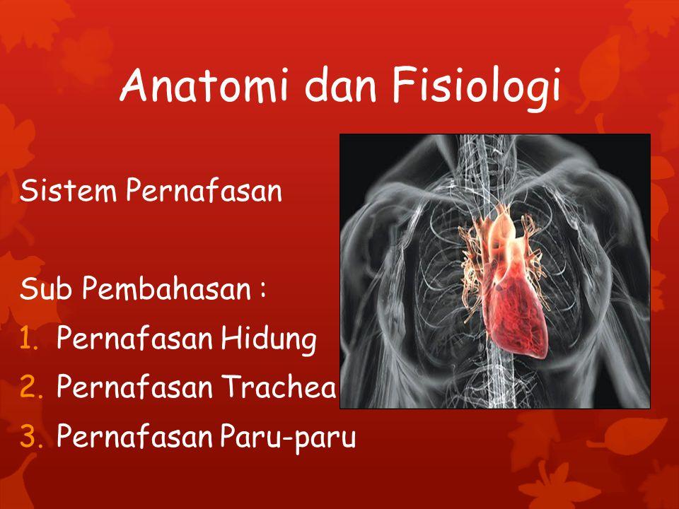 Kelainan/Gangguan/Penyakit Saluran Pernapasan Macam-macam peradangan pada sistem Pernafasan, seperti: bronchitis, laringitis, faringitis, pleuritis, sinusitis.