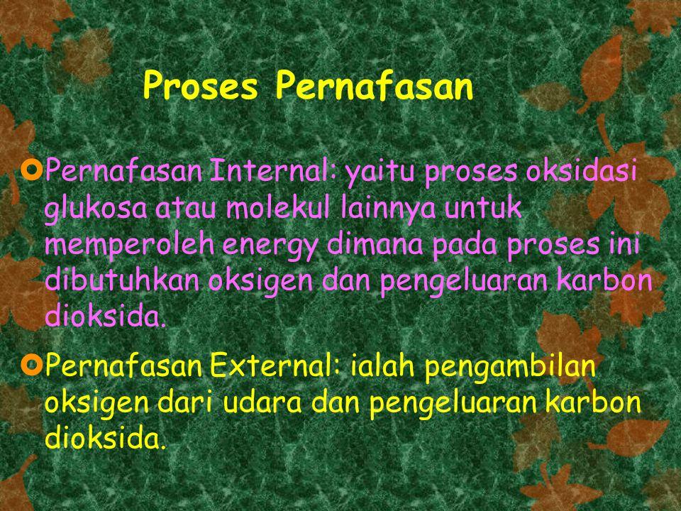 Proses Pernafasan  Pernafasan Internal: yaitu proses oksidasi glukosa atau molekul lainnya untuk memperoleh energy dimana pada proses ini dibutuhkan