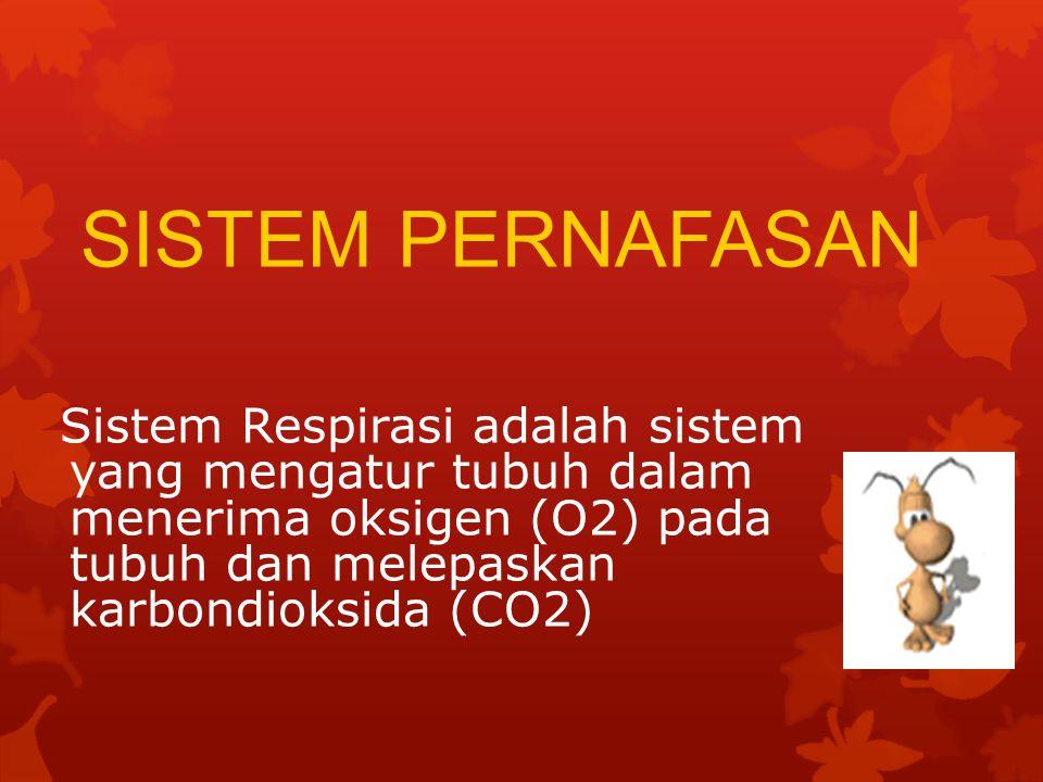 SISTEM PERNAFASAN Sistem Respirasi adalah sistem yang mengatur tubuh dalam menerima oksigen (O2) pada tubuh dan melepaskan karbondioksida (CO2)