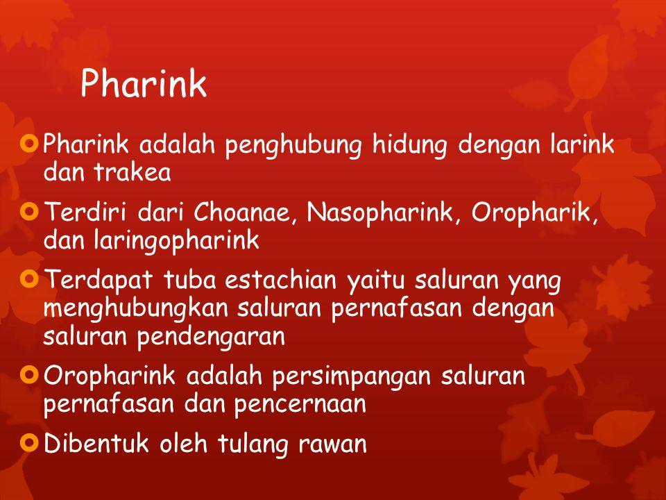 Pharink  Pharink adalah penghubung hidung dengan larink dan trakea  Terdiri dari Choanae, Nasopharink, Oropharik, dan laringopharink  Terdapat tuba