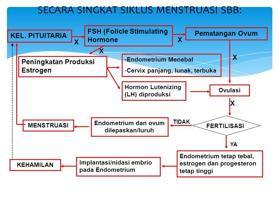 SECARA SINGKAT SIKLUS MENSTRUASI SBB: KEL. PITUITARIA FSH (Folicle Stimulating Hormone Peningkatan Produksi Estrogen Pematangan Ovum -Endometrium Mene