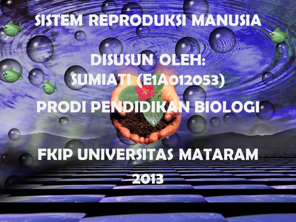 SISTEM REPRODUKSI MANUSIA DISUSUN OLEH: SUMIATI (E1A012053) PRODI PENDIDIKAN BIOLOGI FKIP UNIVERSITAS MATARAM 2013