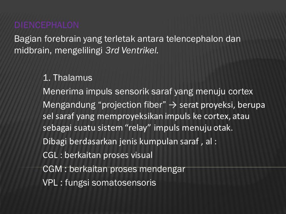 DIENCEPHALON Bagian forebrain yang terletak antara telencephalon dan midbrain, mengelilingi 3rd Ventrikel. 1. Thalamus Menerima impuls sensorik saraf