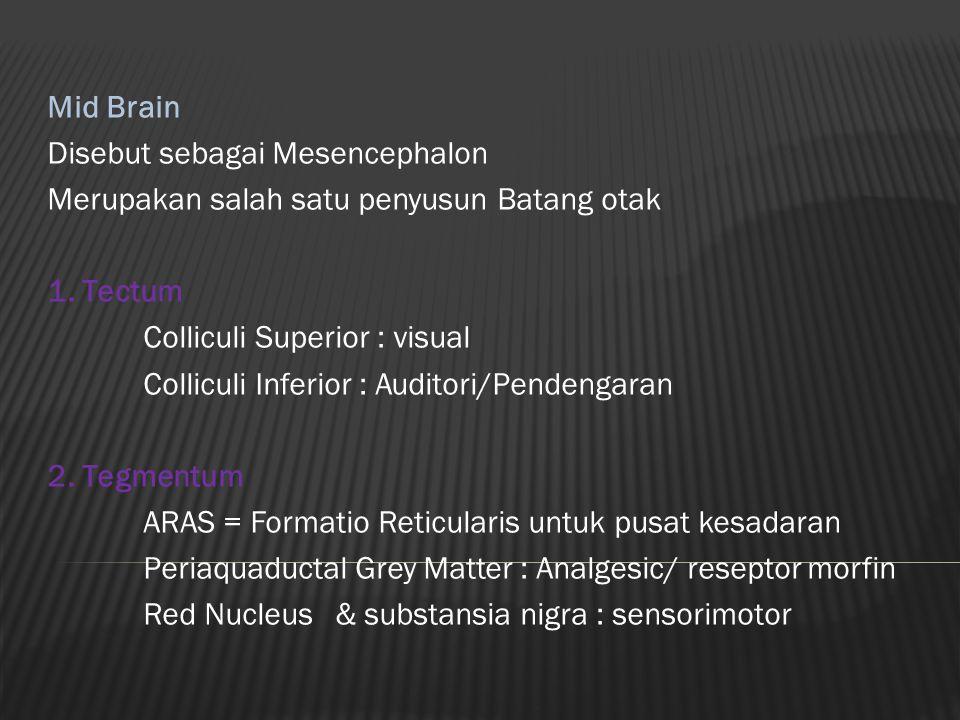 Mid Brain Disebut sebagai Mesencephalon Merupakan salah satu penyusun Batang otak 1. Tectum Colliculi Superior : visual Colliculi Inferior : Auditori/