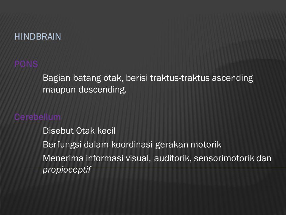 HINDBRAIN PONS Bagian batang otak, berisi traktus-traktus ascending maupun descending. Cerebellum Disebut Otak kecil Berfungsi dalam koordinasi geraka