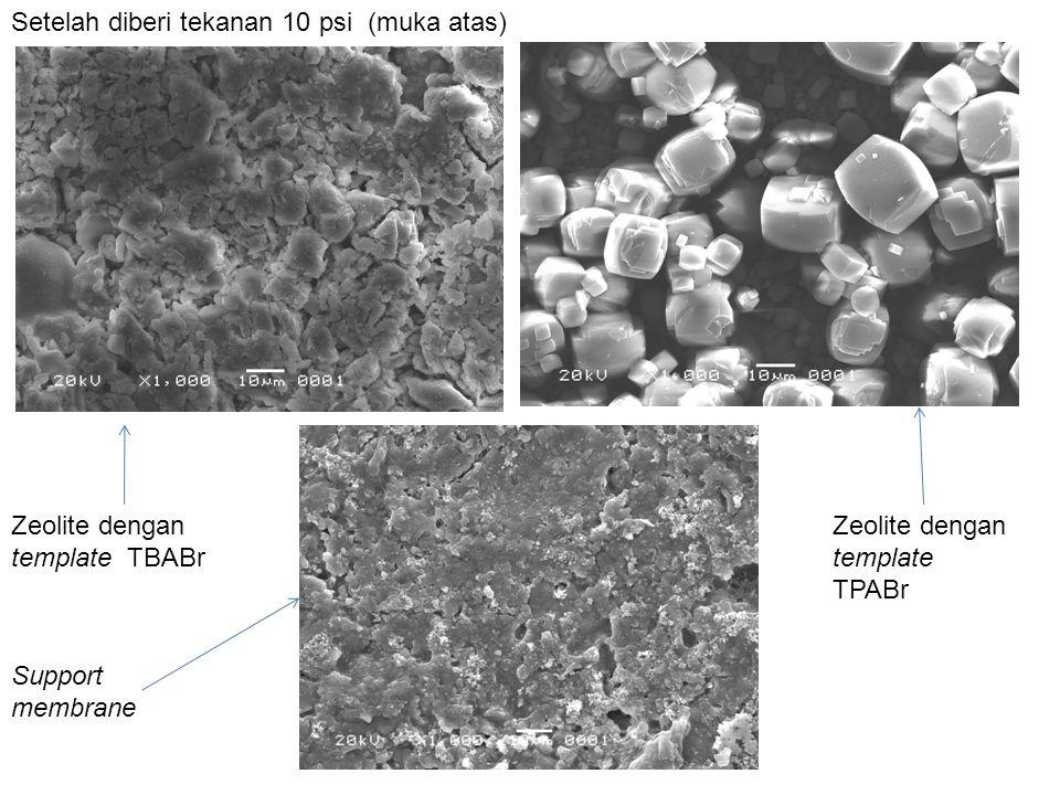 Setelah diberi tekanan 10 psi (muka atas) Zeolite dengan template TBABr Zeolite dengan template TPABr Support membrane