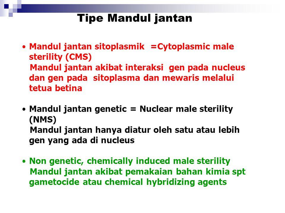 Mandul jantan sitoplasmik =Cytoplasmic male sterility (CMS) Mandul jantan akibat interaksi gen pada nucleus dan gen pada sitoplasma dan mewaris melalu