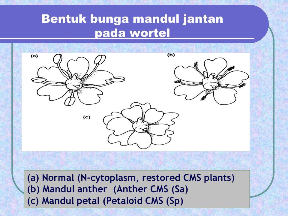 Bentuk bunga mandul jantan pada wortel (a) Normal (N-cytoplasm, restored CMS plants) (b) Mandul anther (Anther CMS (Sa) (c) Mandul petal (Petaloid CMS