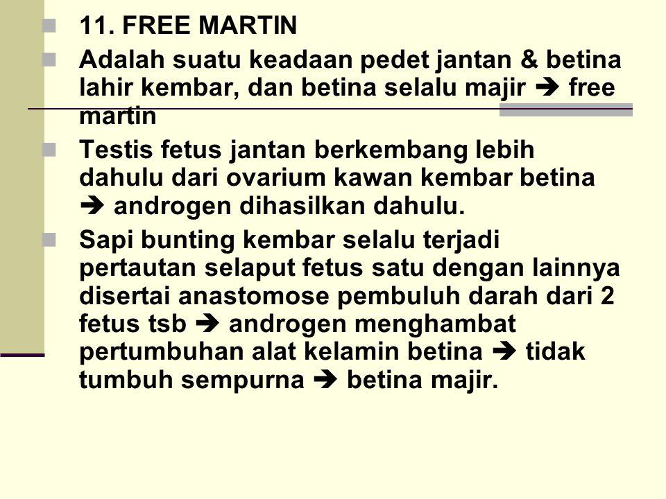11. FREE MARTIN Adalah suatu keadaan pedet jantan & betina lahir kembar, dan betina selalu majir  free martin Testis fetus jantan berkembang lebih da