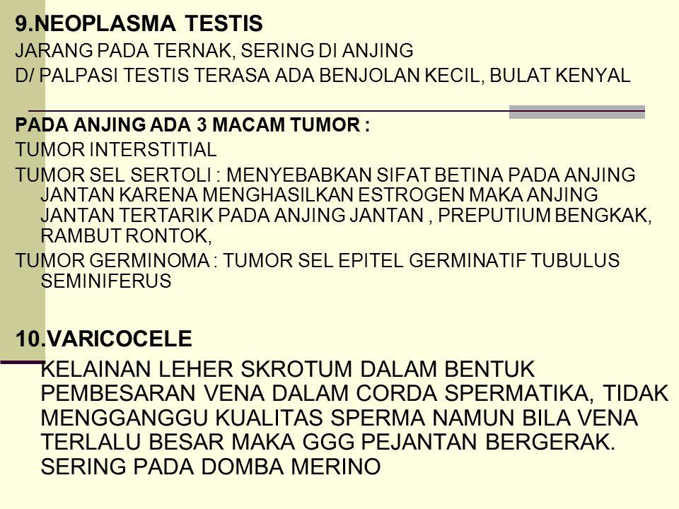 9.NEOPLASMA TESTIS JARANG PADA TERNAK, SERING DI ANJING D/ PALPASI TESTIS TERASA ADA BENJOLAN KECIL, BULAT KENYAL PADA ANJING ADA 3 MACAM TUMOR : TUMO