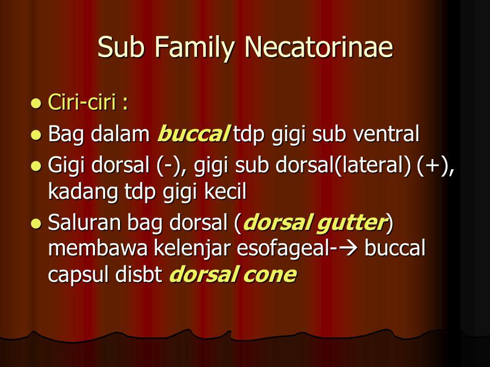 Sub Family Necatorinae Ciri-ciri : Ciri-ciri : Bag dalam buccal tdp gigi sub ventral Bag dalam buccal tdp gigi sub ventral Gigi dorsal (-), gigi sub d