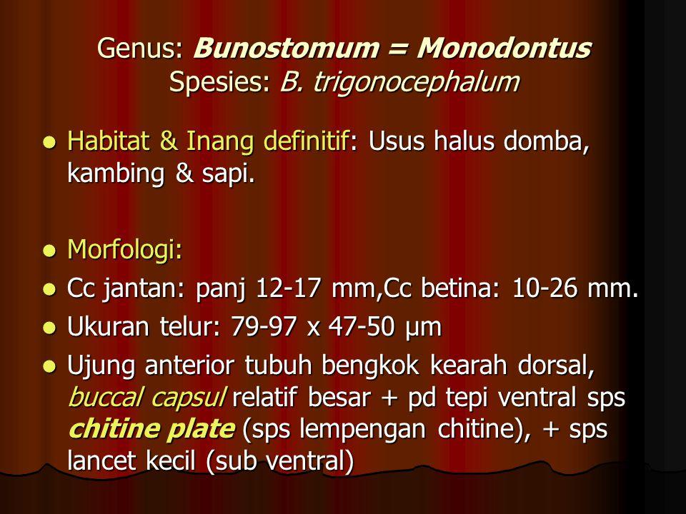 Genus: Bunostomum = Monodontus Spesies: B. trigonocephalum Habitat & Inang definitif: Usus halus domba, kambing & sapi. Habitat & Inang definitif: Usu