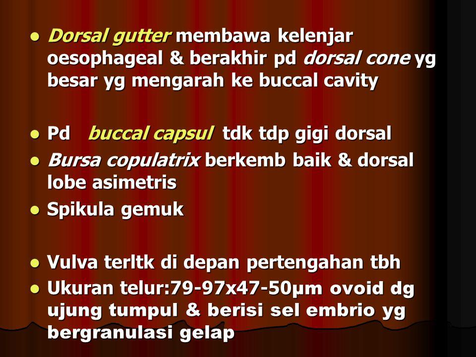 Dorsal gutter membawa kelenjar oesophageal & berakhir pd dorsal cone yg besar yg mengarah ke buccal cavity Dorsal gutter membawa kelenjar oesophageal & berakhir pd dorsal cone yg besar yg mengarah ke buccal cavity Pd buccal capsul tdk tdp gigi dorsal Pd buccal capsul tdk tdp gigi dorsal Bursa copulatrix berkemb baik & dorsal lobe asimetris Bursa copulatrix berkemb baik & dorsal lobe asimetris Spikula gemuk Spikula gemuk Vulva terltk di depan pertengahan tbh Vulva terltk di depan pertengahan tbh Ukuran telur:79-97x47-50 µm ovoid dg ujung tumpul & berisi sel embrio yg bergranulasi gelap Ukuran telur:79-97x47-50 µm ovoid dg ujung tumpul & berisi sel embrio yg bergranulasi gelap