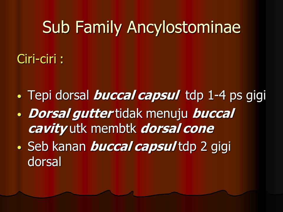 Sub Family Ancylostominae Ciri-ciri : Tepi dorsal buccal capsul tdp 1-4 ps gigi Tepi dorsal buccal capsul tdp 1-4 ps gigi Dorsal gutter tidak menuju b