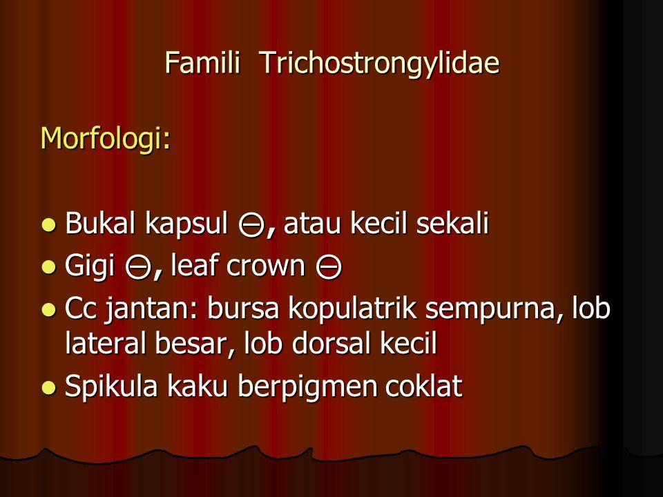 Famili Trichostrongylidae Morfologi: Bukal kapsul ⊝, atau kecil sekali Bukal kapsul ⊝, atau kecil sekali Gigi ⊝, leaf crown ⊝ Gigi ⊝, leaf crown ⊝ Cc