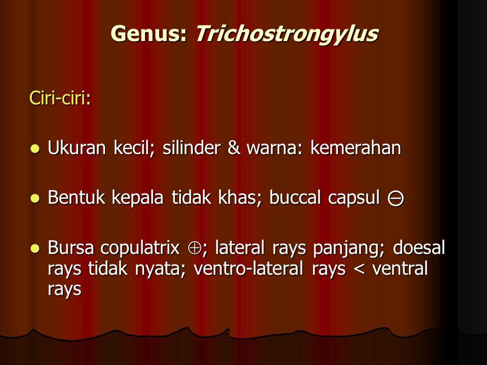 Genus: Trichostrongylus Ciri-ciri: Ukuran kecil; silinder & warna: kemerahan Ukuran kecil; silinder & warna: kemerahan Bentuk kepala tidak khas; bucca