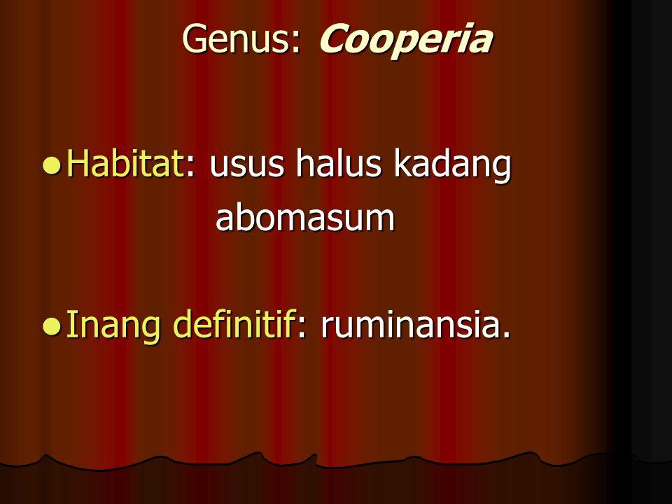 Genus: Cooperia Habitat: usus halus kadang Habitat: usus halus kadang abomasum abomasum Inang definitif: ruminansia. Inang definitif: ruminansia.