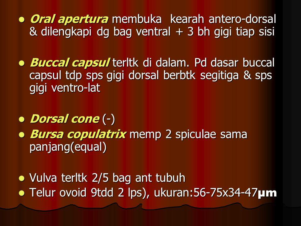 Oral apertura membuka kearah antero-dorsal & dilengkapi dg bag ventral + 3 bh gigi tiap sisi Oral apertura membuka kearah antero-dorsal & dilengkapi dg bag ventral + 3 bh gigi tiap sisi Buccal capsul terltk di dalam.