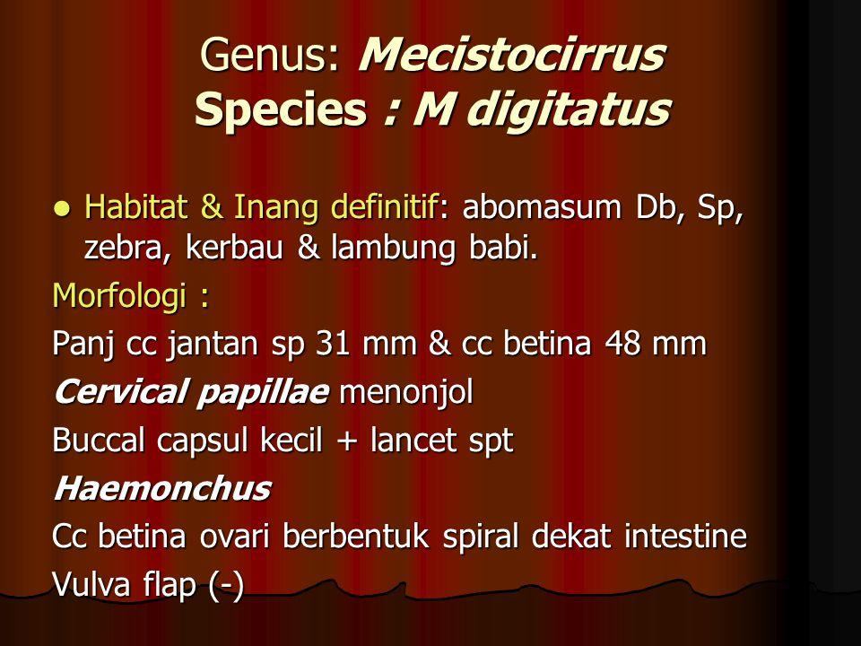 Genus: Mecistocirrus Species : M digitatus Habitat & Inang definitif: abomasum Db, Sp, zebra, kerbau & lambung babi.