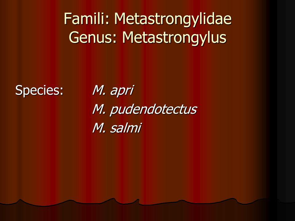 Famili: Metastrongylidae Genus: Metastrongylus Species:M. apri Species:M. apri M. pudendotectus M. pudendotectus M. salmi M. salmi