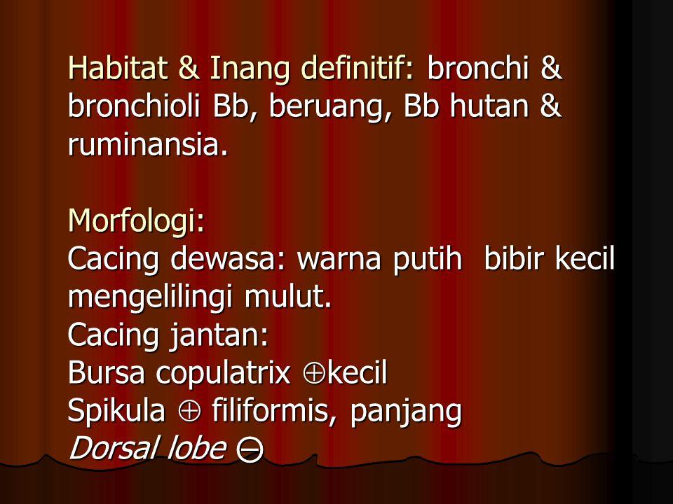 Habitat & Inang definitif: bronchi & bronchioli Bb, beruang, Bb hutan & ruminansia. Morfologi: Cacing dewasa: warna putih bibir kecil mengelilingi mul