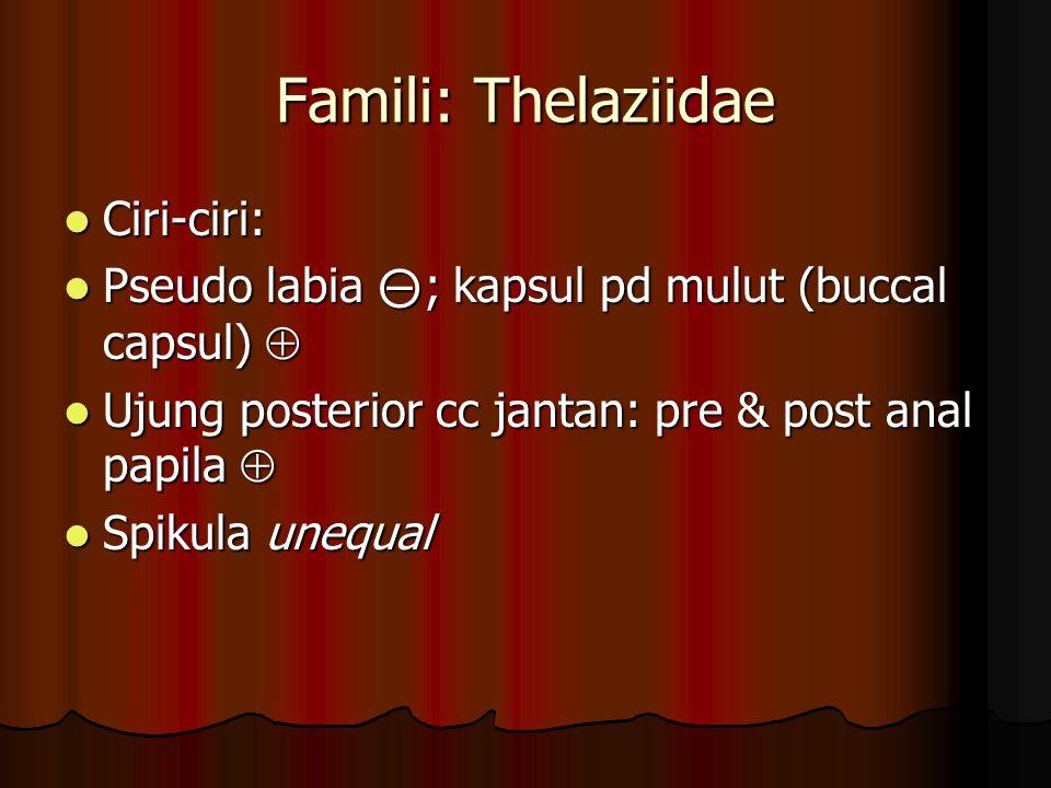 Famili: Thelaziidae Ciri-ciri: Ciri-ciri: Pseudo labia ⊝ ; kapsul pd mulut (buccal capsul)  Pseudo labia ⊝ ; kapsul pd mulut (buccal capsul)  Ujung