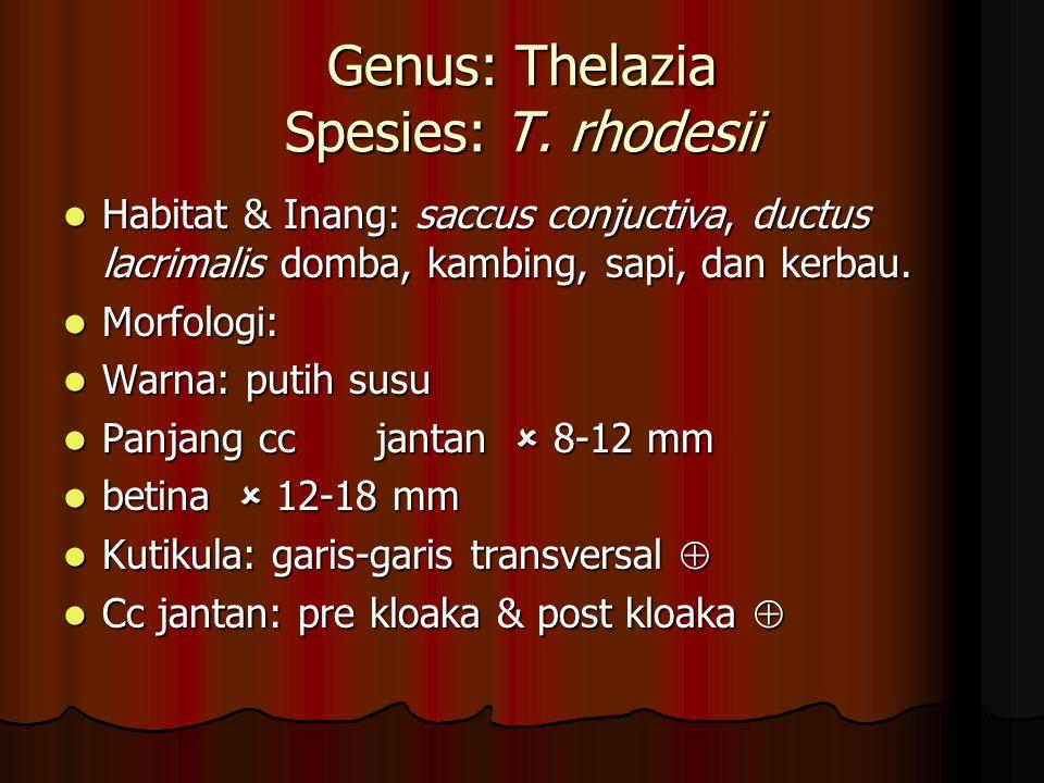Genus: Thelazia Spesies: T. rhodesii Habitat & Inang: saccus conjuctiva, ductus lacrimalis domba, kambing, sapi, dan kerbau. Habitat & Inang: saccus c