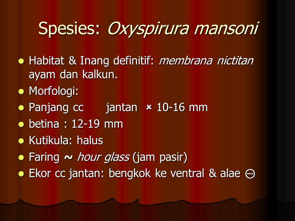 Spesies: Oxyspirura mansoni Habitat & Inang definitif: membrana nictitan ayam dan kalkun. Habitat & Inang definitif: membrana nictitan ayam dan kalkun