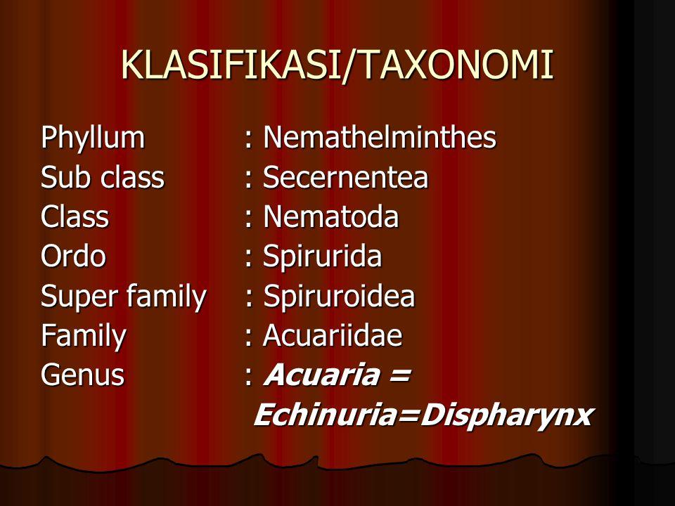 KLASIFIKASI/TAXONOMI Phyllum: Nemathelminthes Sub class: Secernentea Class: Nematoda Ordo: Spirurida Super family : Spiruroidea Family: Acuariidae Genus: Acuaria = Echinuria=Dispharynx Echinuria=Dispharynx