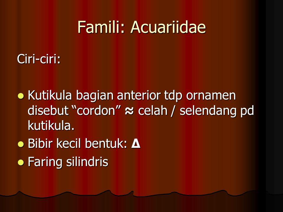 "Famili: Acuariidae Ciri-ciri: Kutikula bagian anterior tdp ornamen disebut ""cordon"" ≈ celah / selendang pd kutikula. Kutikula bagian anterior tdp orna"
