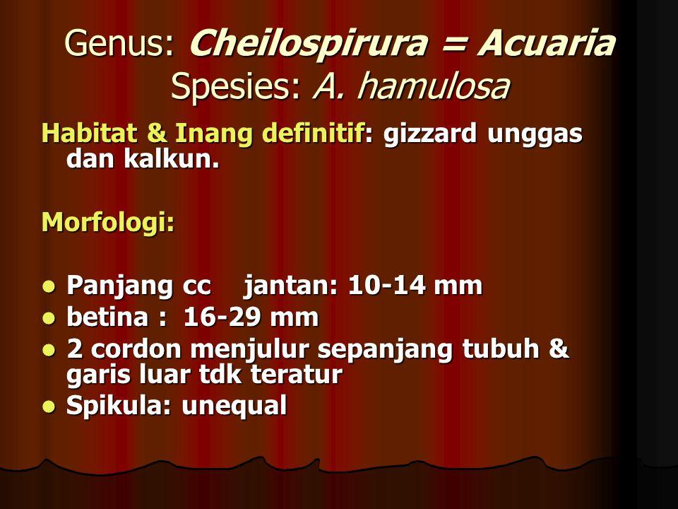 Genus: Cheilospirura = Acuaria Spesies: A. hamulosa Habitat & Inang definitif: gizzard unggas dan kalkun. Morfologi: Panjang ccjantan: 10-14 mm Panjan