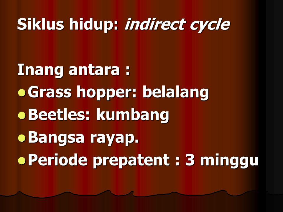 Siklus hidup: indirect cycle Inang antara : Grass hopper: belalang Grass hopper: belalang Beetles: kumbang Beetles: kumbang Bangsa rayap. Bangsa rayap