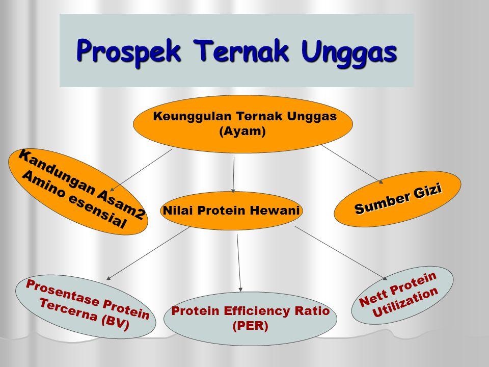 Pertemuan I PENDAHULUAN  Prospek Ternak Unggas di Indonesia dan keunggulannya  Faktor Pembatas (kendala) Ternak Unggas, terutama Ayam Ras.