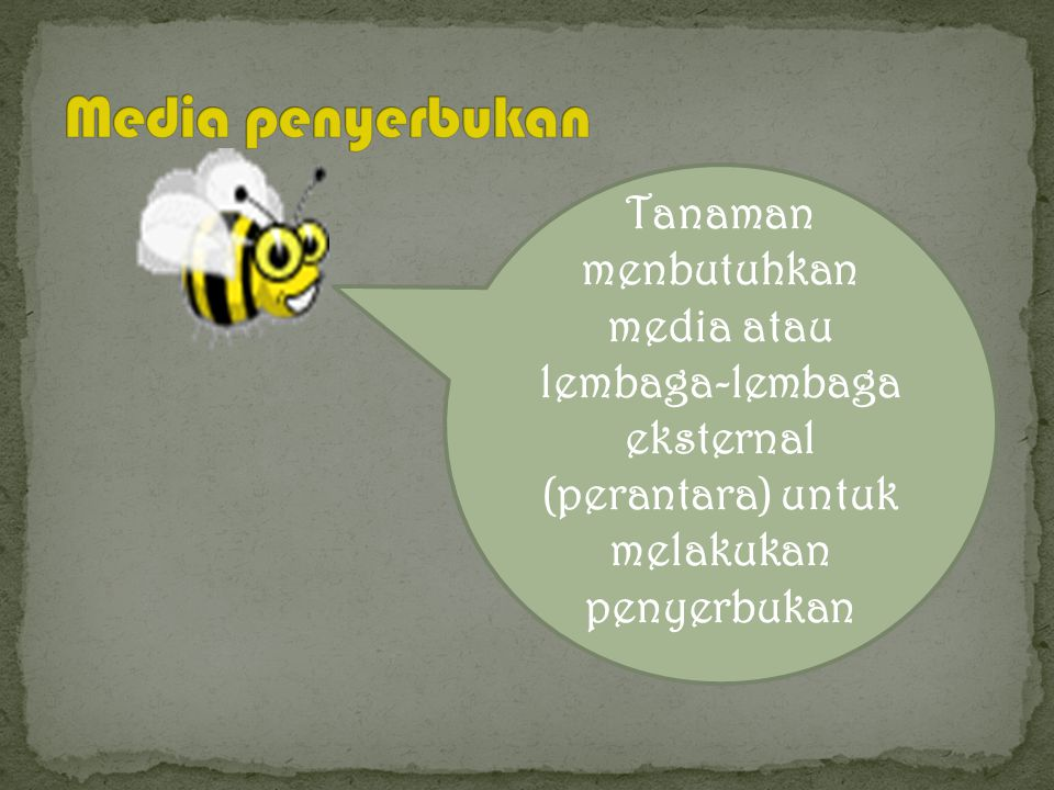 Butir serbuk sari dilepaskan dari antera matang dan dapat digunakan dalam diri sendiri atau penyerbukan silang antera next back menu