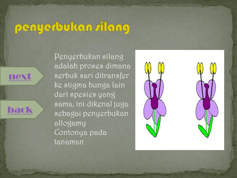 next back Penyerbukan sendiri adalah proses dimana serbuk sari ditransfer ke stigma bunga yang sama, contohnya pada tanaman jagung.