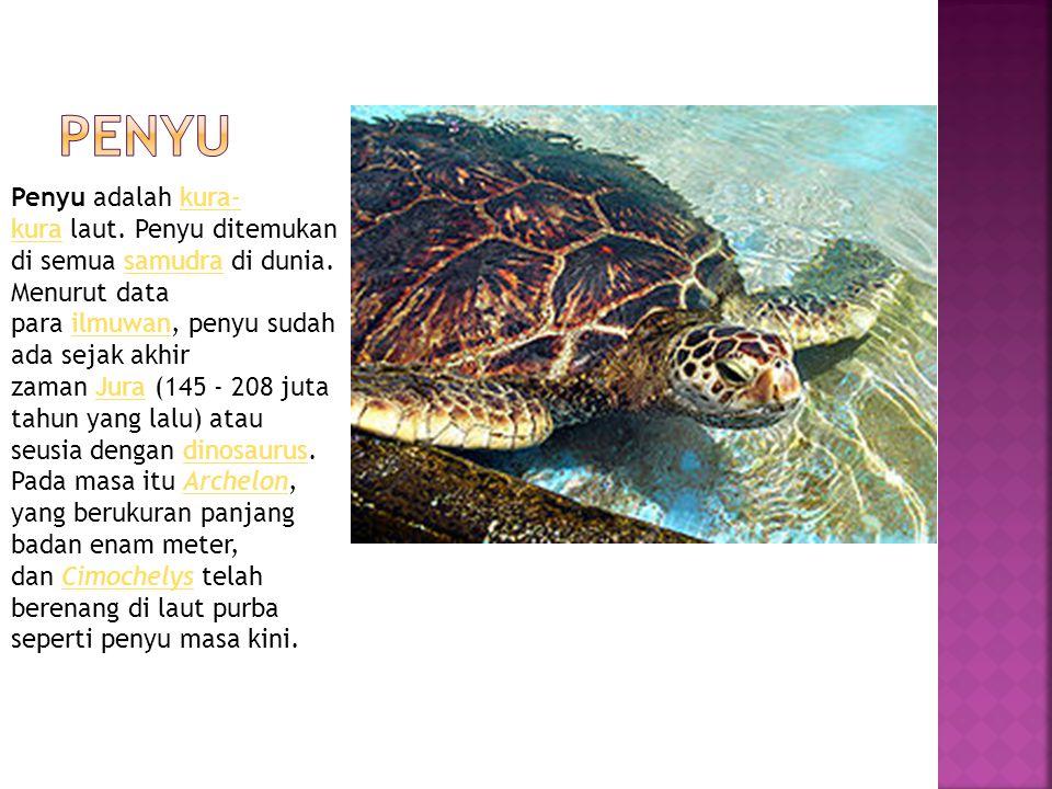 Penyu adalah kura- kura laut. Penyu ditemukan di semua samudra di dunia. Menurut data para ilmuwan, penyu sudah ada sejak akhir zaman Jura (145 - 208