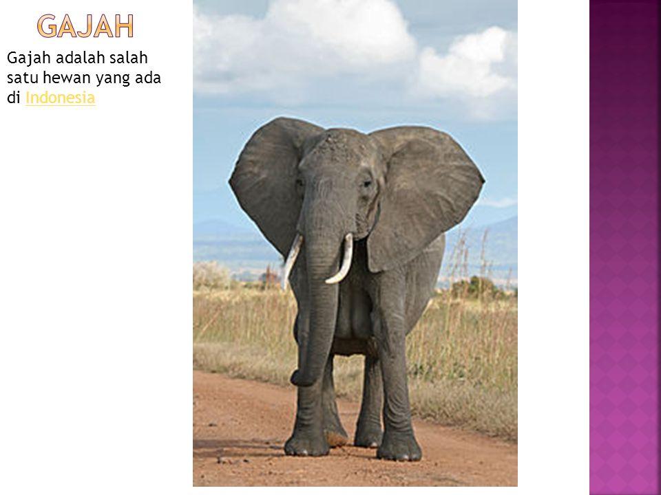 Gajah adalah salah satu hewan yang ada di IndonesiaIndonesia
