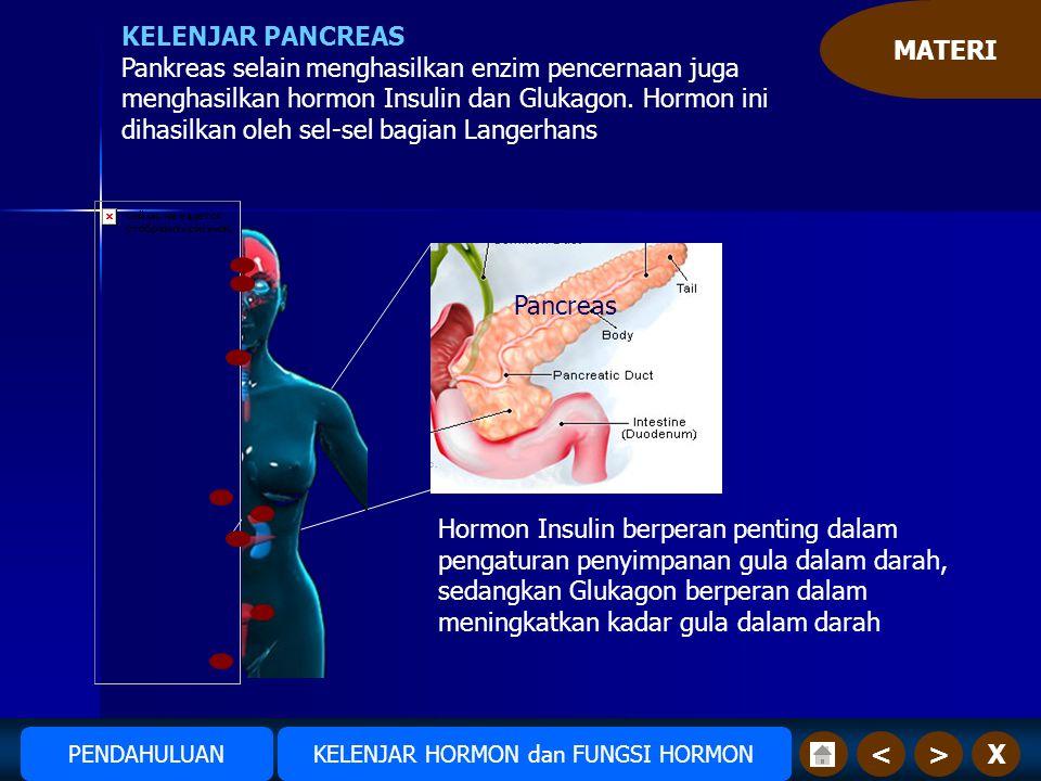 MATERI X>< KELENJAR PANCREAS Pankreas selain menghasilkan enzim pencernaan juga menghasilkan hormon Insulin dan Glukagon.