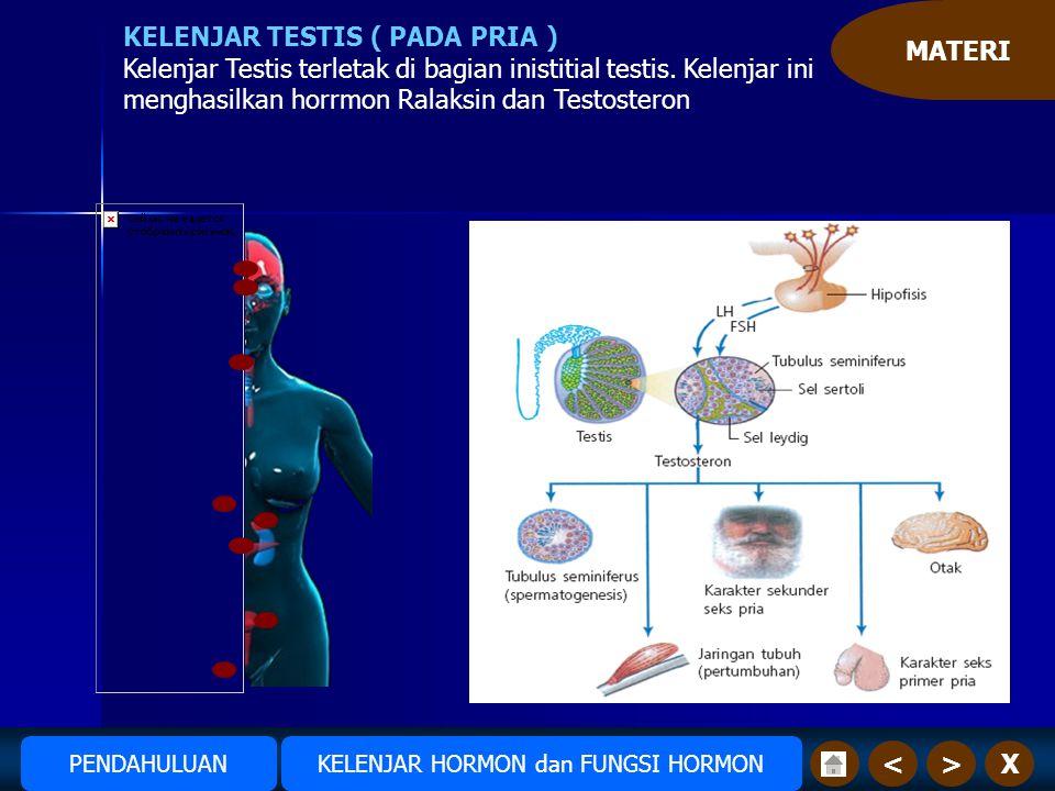 MATERI X>< KELENJAR TESTIS ( PADA PRIA ) Kelenjar Testis terletak di bagian inistitial testis.
