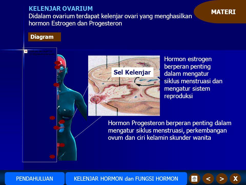MATERI X>< KELENJAR OVARIUM Didalam ovarium terdapat kelenjar ovari yang menghasilkan hormon Estrogen dan Progesteron Pancreas Hormon estrogen berperan penting dalam mengatur siklus menstruasi dan mengatur sistem reproduksi Sel Kelenjar Hormon Progesteron berperan penting dalam mengatur siklus menstruasi, perkembangan ovum dan ciri kelamin skunder wanita Amudiono KELENJAR HORMON dan FUNGSI HORMONPENDAHULUAN Diagram