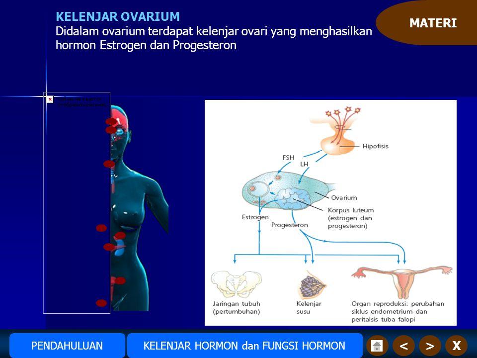 MATERI X>< KELENJAR OVARIUM Didalam ovarium terdapat kelenjar ovari yang menghasilkan hormon Estrogen dan Progesteron Amudiono KELENJAR HORMON dan FUNGSI HORMONPENDAHULUAN