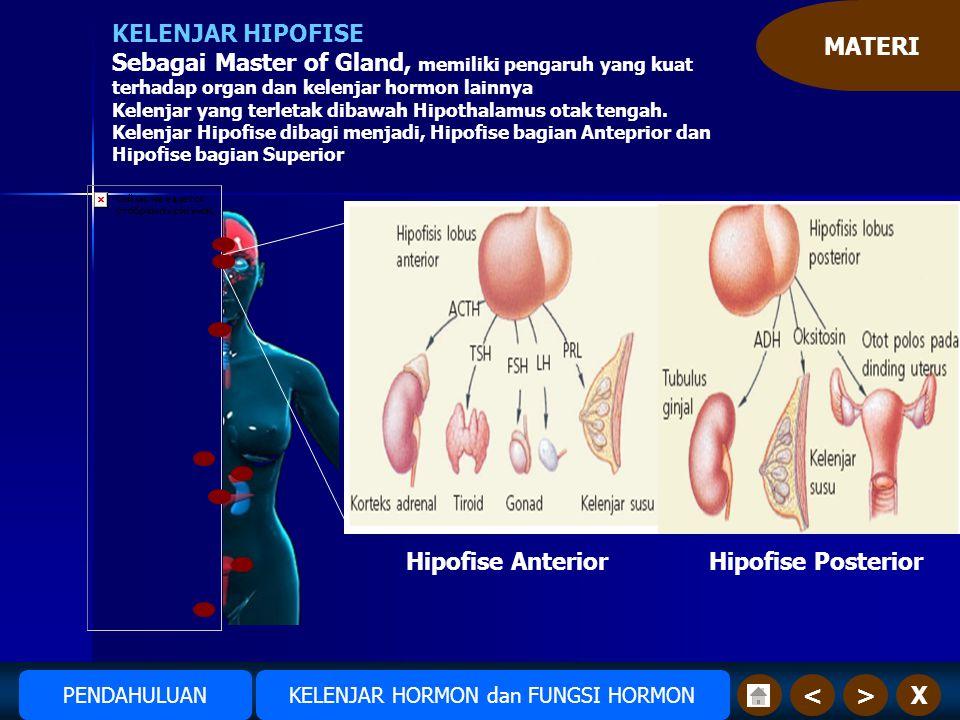MATERI X>< KELENJAR HIPOFISE Sebagai Master of Gland, memiliki pengaruh yang kuat terhadap organ dan kelenjar hormon lainnya Kelenjar yang terletak dibawah Hipothalamus otak tengah.