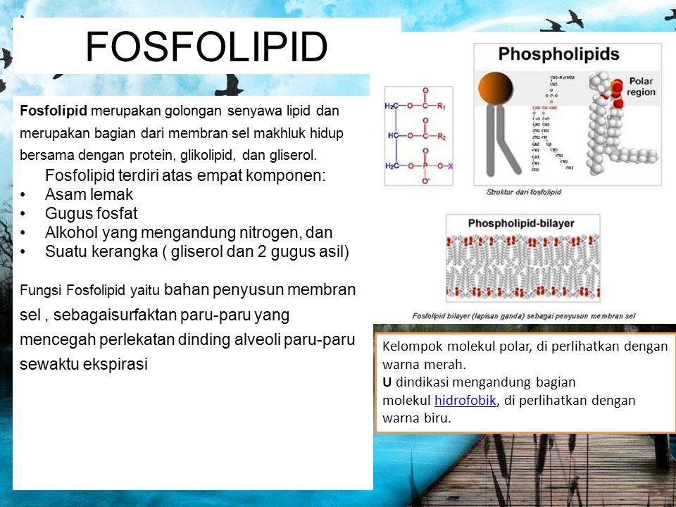 FOSFOLIPID Fosfolipid merupakan golongan senyawa lipid dan merupakan bagian dari membran sel makhluk hidup bersama dengan protein, glikolipid, dan gli