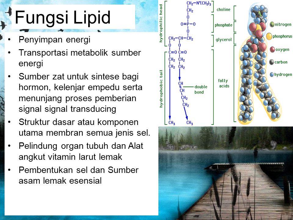 Fungsi Lipid Penyimpan energi Transportasi metabolik sumber energi Sumber zat untuk sintese bagi hormon, kelenjar empedu serta menunjang proses pember