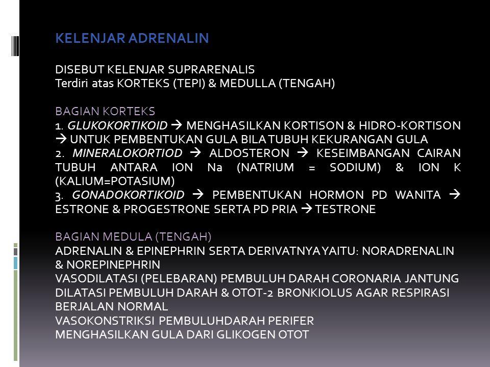 KELENJAR ADRENALIN DISEBUT KELENJAR SUPRARENALIS Terdiri atas KORTEKS (TEPI) & MEDULLA (TENGAH) BAGIAN KORTEKS 1.