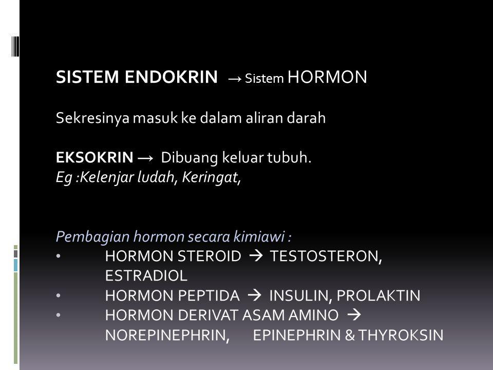SISTEM ENDOKRIN → Sistem HORMON Sekresinya masuk ke dalam aliran darah EKSOKRIN → Dibuang keluar tubuh. Eg :Kelenjar ludah, Keringat, Pembagian hormon