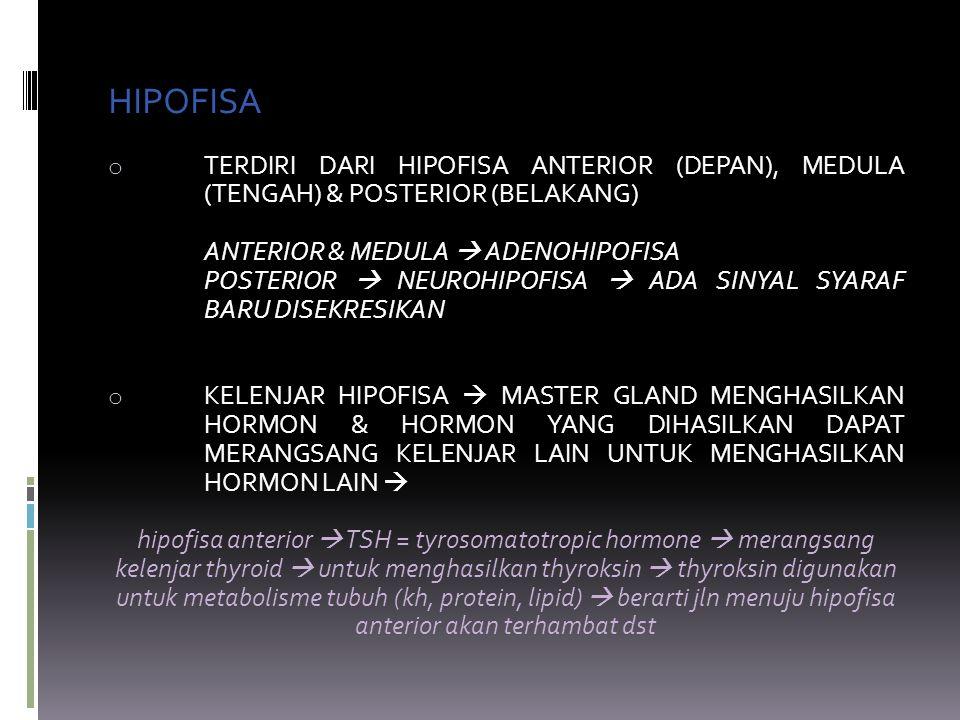 HIPOFISA o TERDIRI DARI HIPOFISA ANTERIOR (DEPAN), MEDULA (TENGAH) & POSTERIOR (BELAKANG) ANTERIOR & MEDULA  ADENOHIPOFISA POSTERIOR  NEUROHIPOFISA