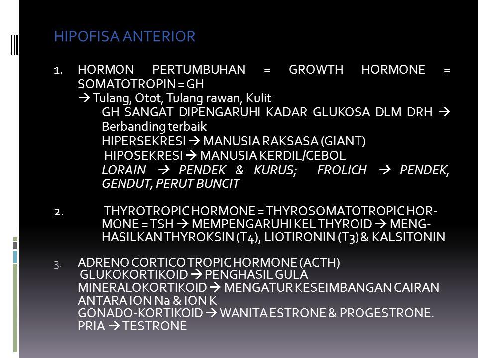 HIPOFISA ANTERIOR 1. HORMON PERTUMBUHAN = GROWTH HORMONE = SOMATOTROPIN = GH  Tulang, Otot, Tulang rawan, Kulit GH SANGAT DIPENGARUHI KADAR GLUKOSA D